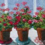 Five pink geraniums