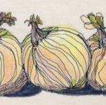 Onions 10 x 20 25